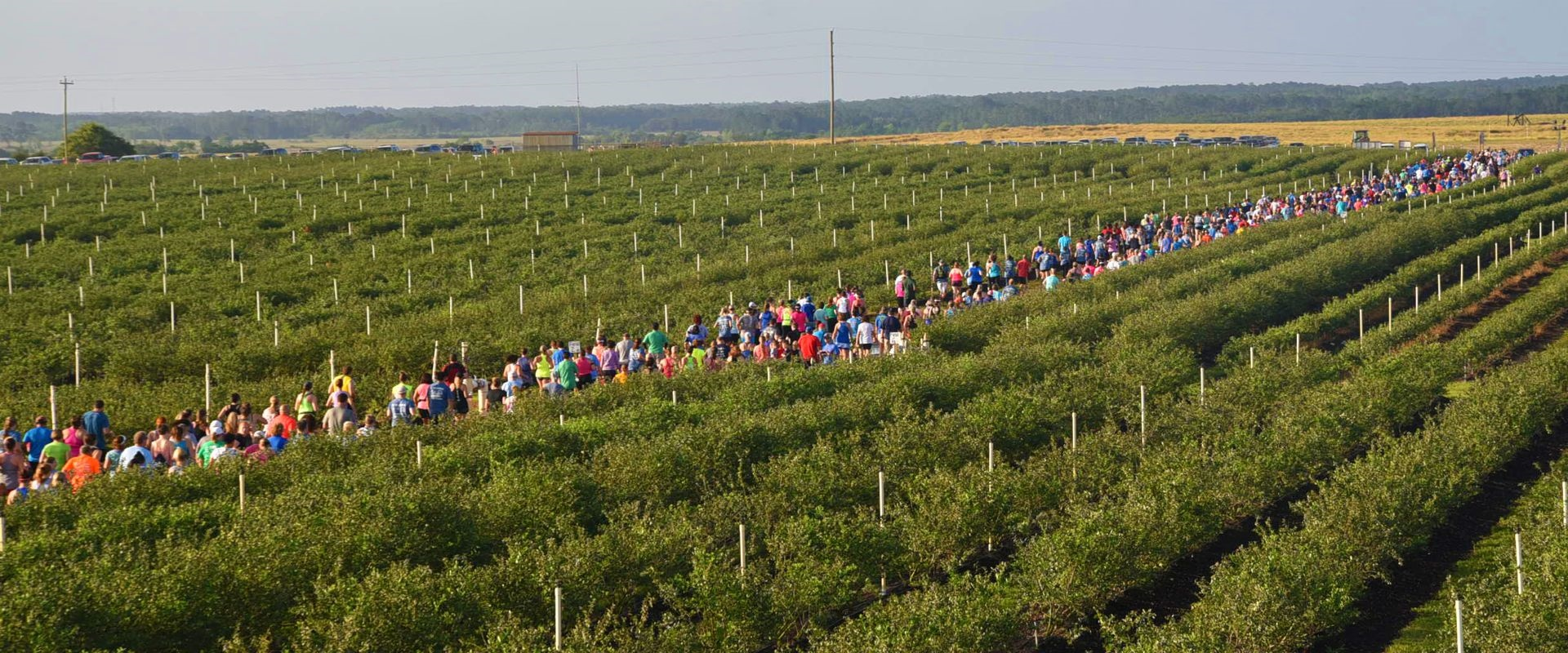 U-RUN, U-PICK, BLUEBERRY 5K - April 25